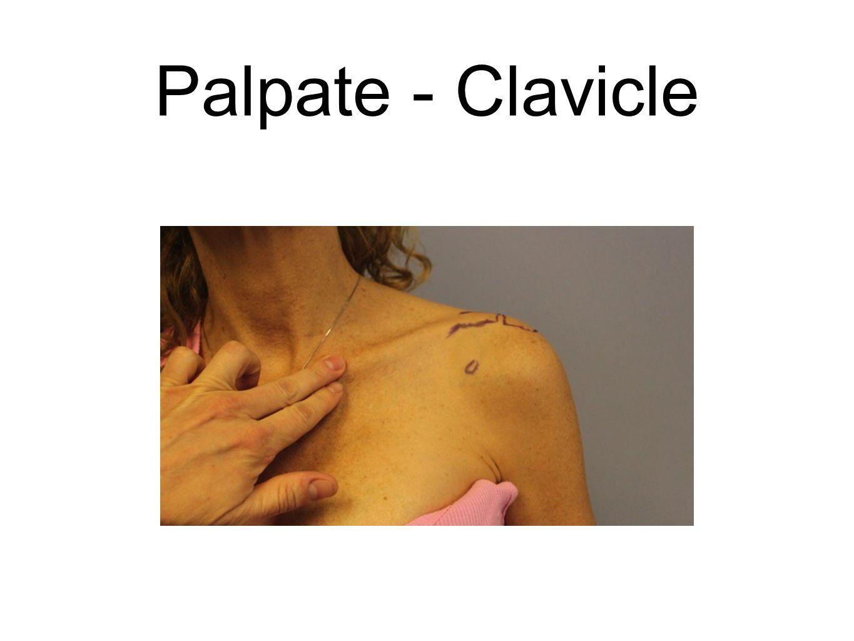 Palpate - Clavicle