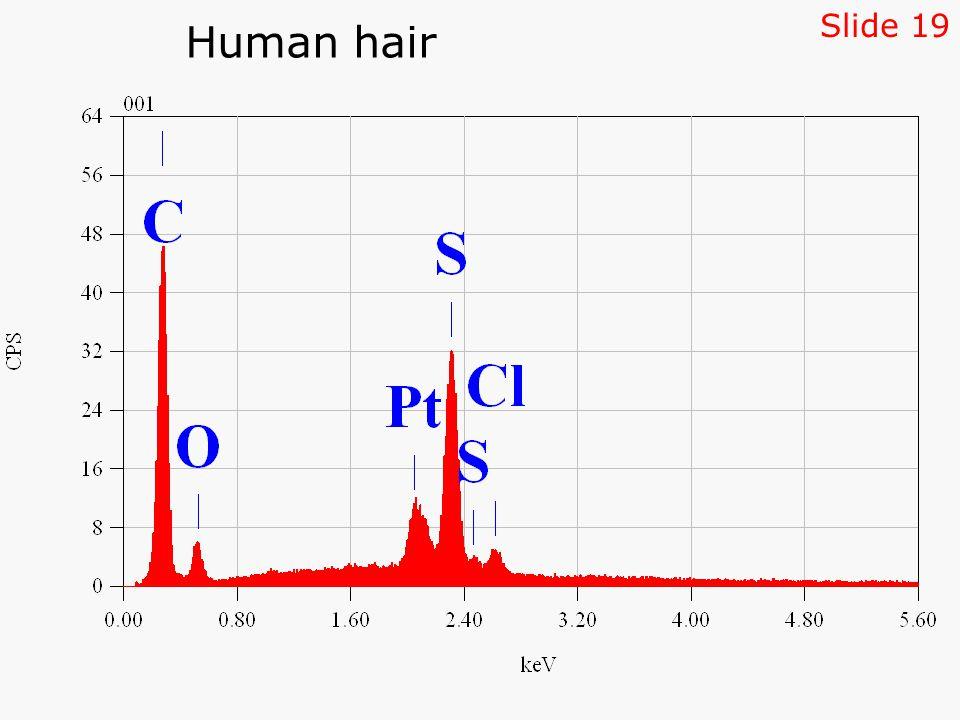 Human hair Slide 19