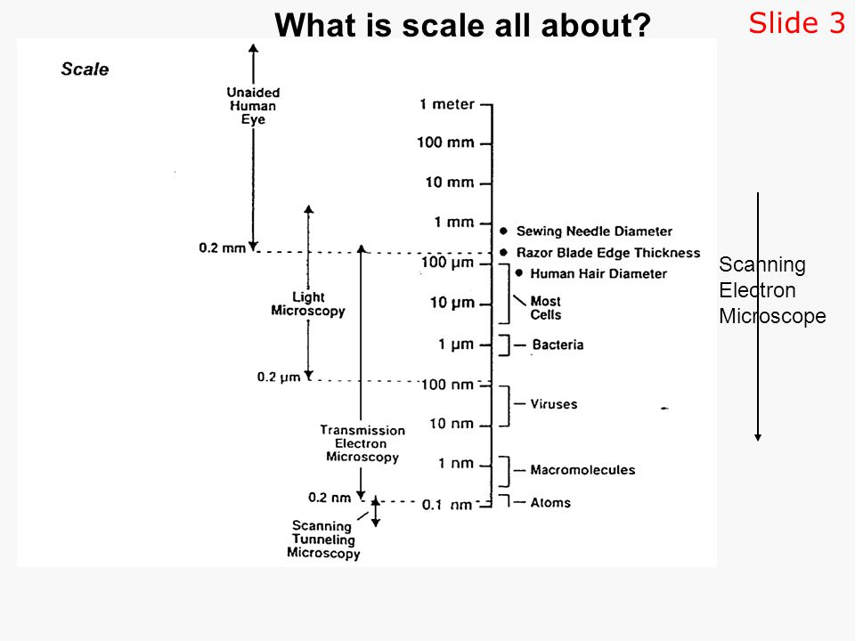 Scanning Electron Microscope What is scale all about Slide 3