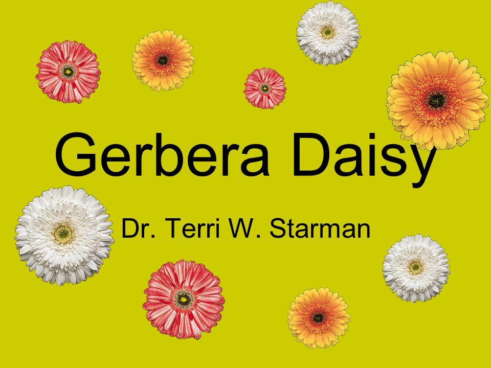 Gerbera Daisy Dr. Terri W. Starman
