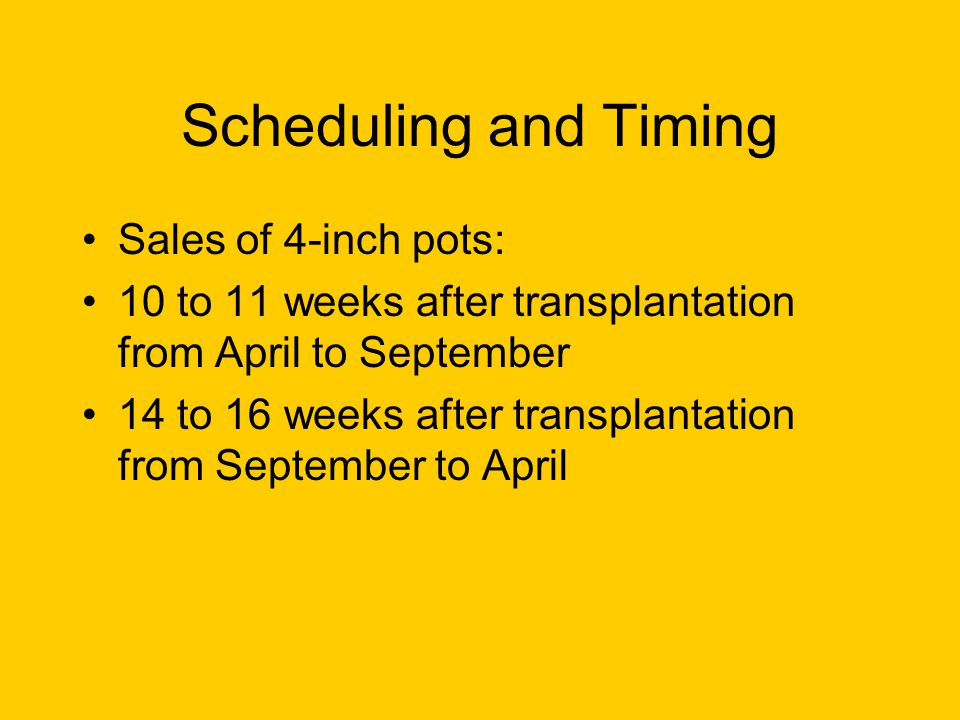 Scheduling and Timing Sales of 4-inch pots: 10 to 11 weeks after transplantation from April to September 14 to 16 weeks after transplantation from September to April