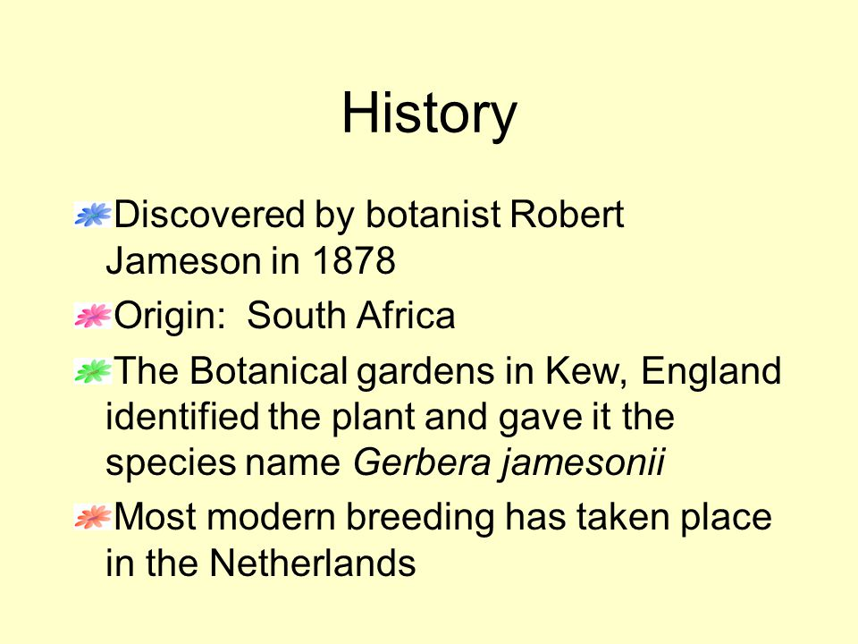 History Discovered by botanist Robert Jameson in 1878 Origin: South Africa The Botanical gardens in Kew, England identified the plant and gave it the species name Gerbera jamesonii Most modern breeding has taken place in the Netherlands