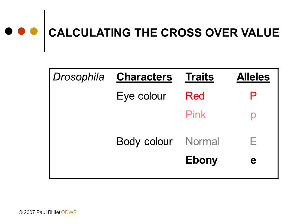 CALCULATING THE CROSS OVER VALUE DrosophilaCharactersTraitsAlleles Eye colourRedP Pinkp Body colourNormalE Ebonye © 2007 Paul Billiet ODWSODWS