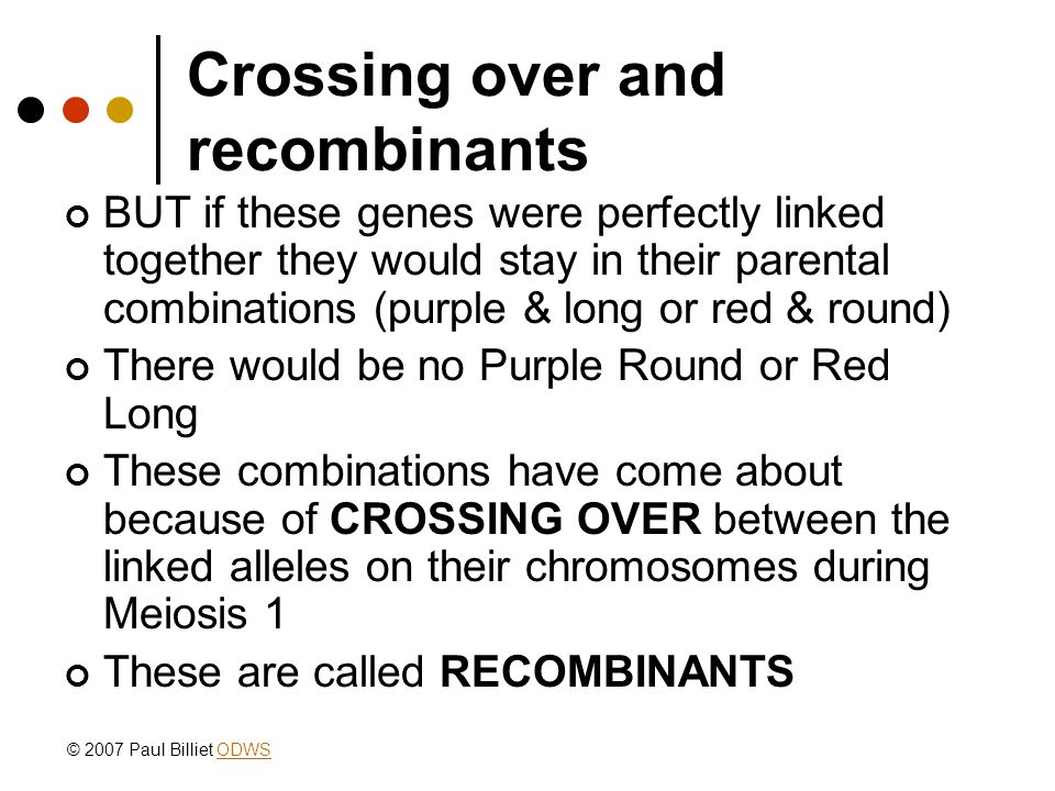 Crossing over and recombinants BUT if these genes were perfectly linked together they would stay in their parental combinations (purple & long or red & round) There would be no Purple Round or Red Long These combinations have come about because of CROSSING OVER between the linked alleles on their chromosomes during Meiosis 1 These are called RECOMBINANTS © 2007 Paul Billiet ODWSODWS
