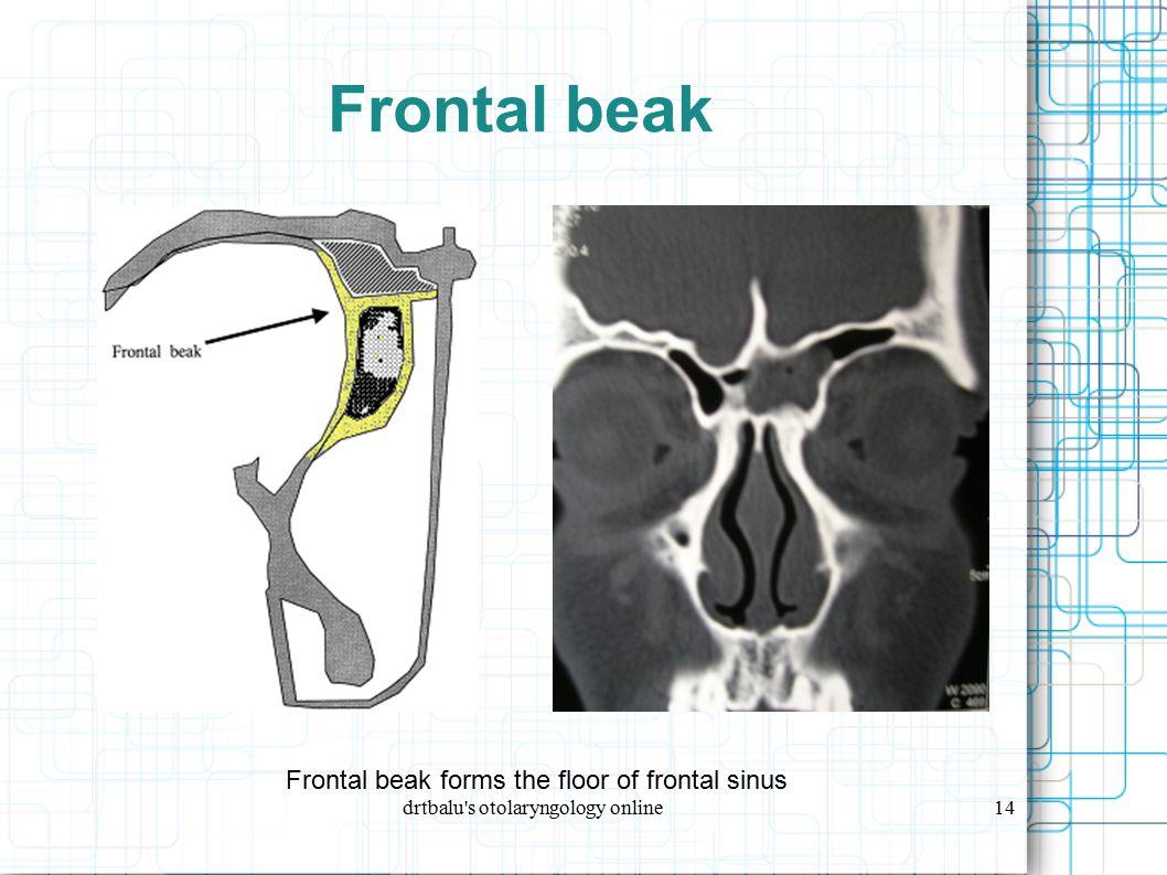 drtbalu s otolaryngology online14 Frontal beak Frontal beak forms the floor of frontal sinus