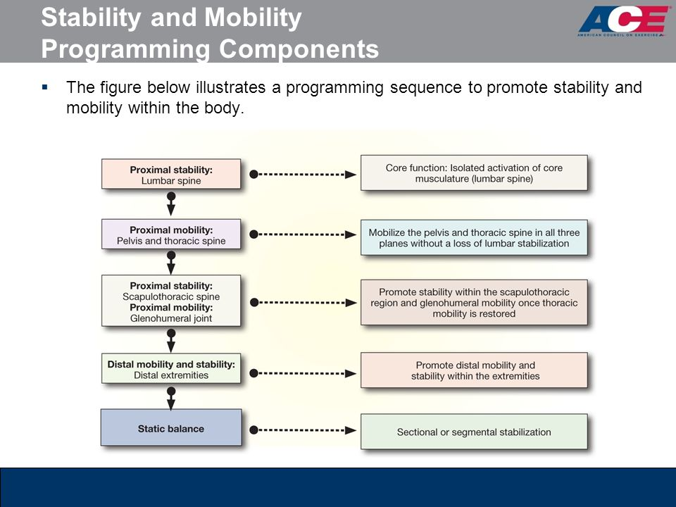 Stability and Mobility Programming Components  The figure below illustrates a programming sequence to promote stability and mobility within the body.
