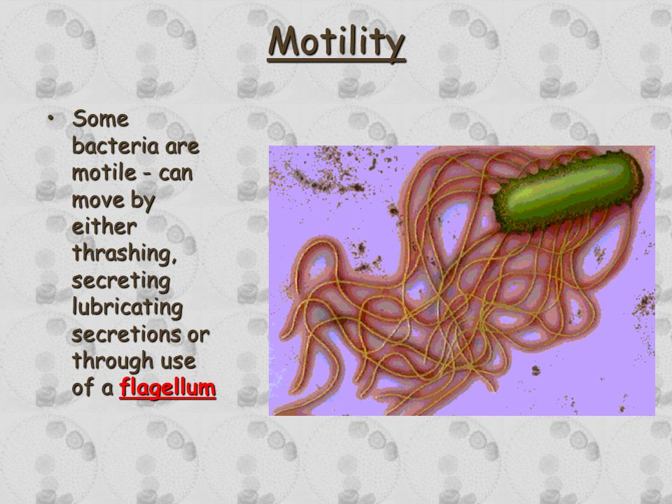 Motility Some bacteria are motile - can move by either thrashing, secreting lubricating secretions or through use of a flagellumSome bacteria are motile - can move by either thrashing, secreting lubricating secretions or through use of a flagellum