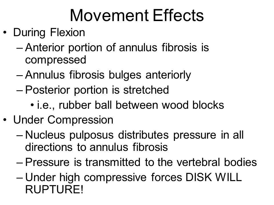 Movement Effects During Flexion –Anterior portion of annulus fibrosis is compressed –Annulus fibrosis bulges anteriorly –Posterior portion is stretche