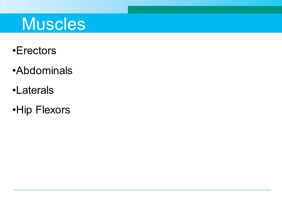 Muscles Erectors Abdominals Laterals Hip Flexors