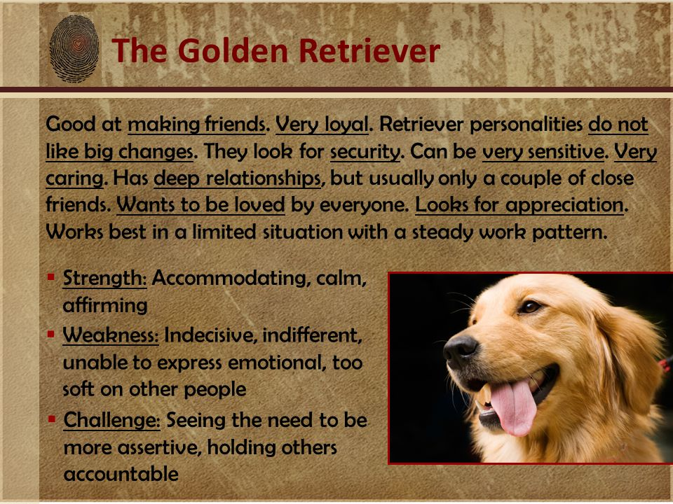 The Golden Retriever Good at making friends. Very loyal.