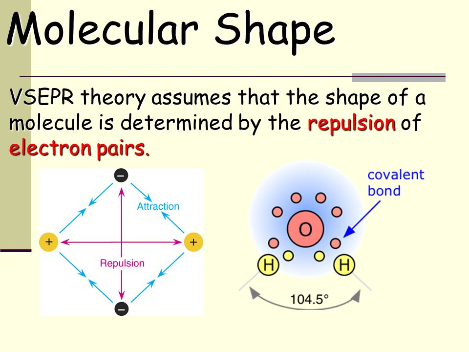 VSEPR theory assumes that the shape of a molecule is determined by the repulsion of electron pairs.