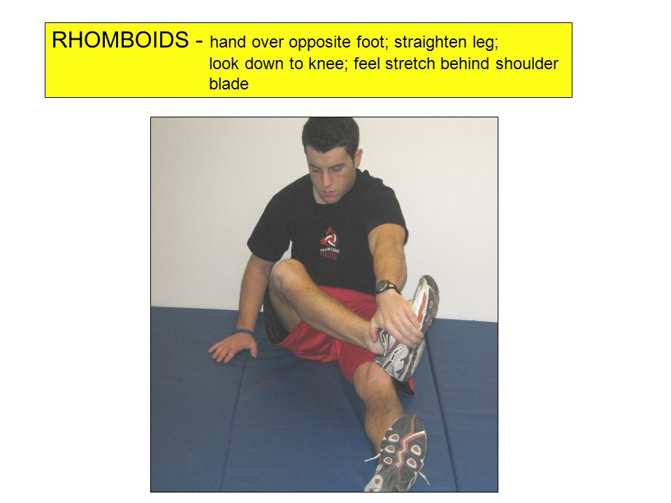 RHOMBOIDS - hand over opposite foot; straighten leg; look down to knee; feel stretch behind shoulder blade