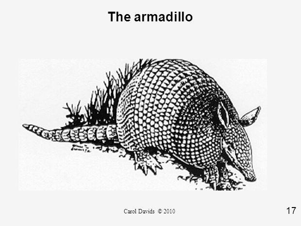 17 Carol Davids © 2010 The armadillo