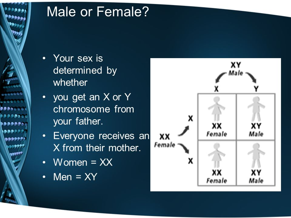 Male or Female. Your sex is determined by whether you get an X or Y chromosome from your father.