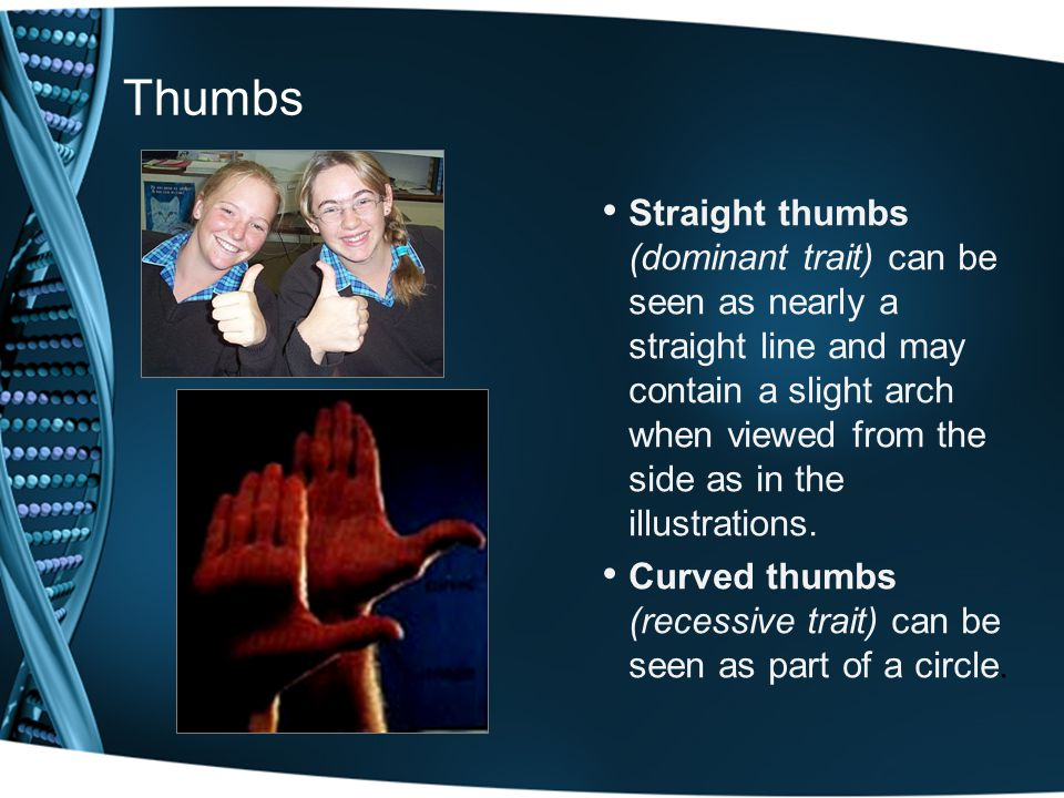 Thumbs Straight thumbs (dominant trait) can be seen as nearly a straight line and may contain a slight arch when viewed from the side as in the illustrations.