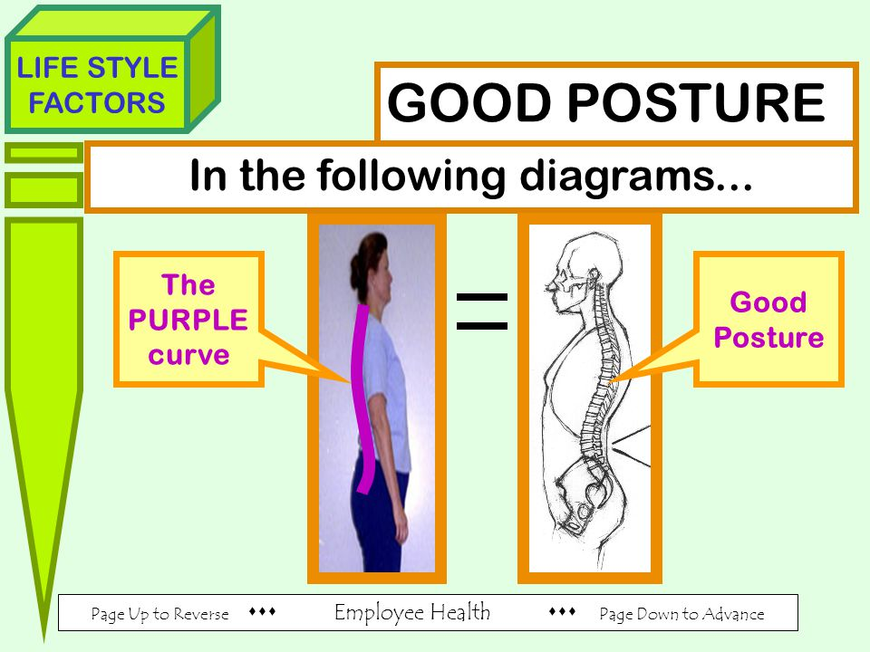Page Up to Reverse  Employee Health  Page Down to Advance LIFE STYLE FACTORS GOOD POSTURE In the following diagrams...