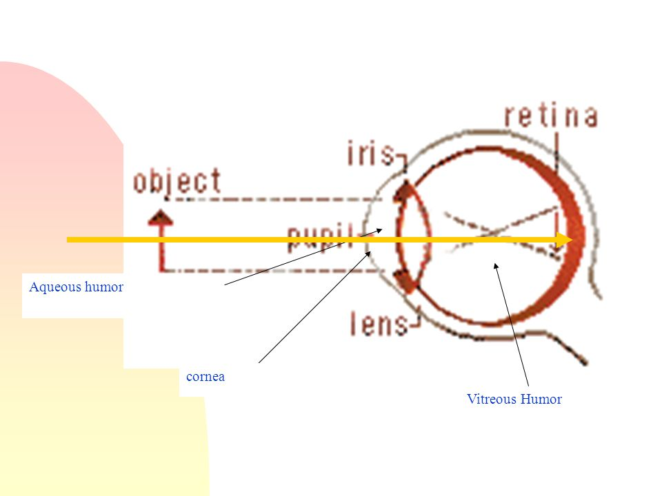 Where does most refraction occur. n At the air/cornea interface.