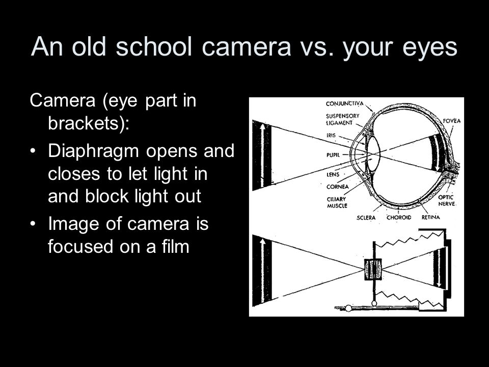 An old school camera vs. your eyes Camera (eye part in brackets): Diaphragm opens and closes to let light in and block light out Image of camera is fo