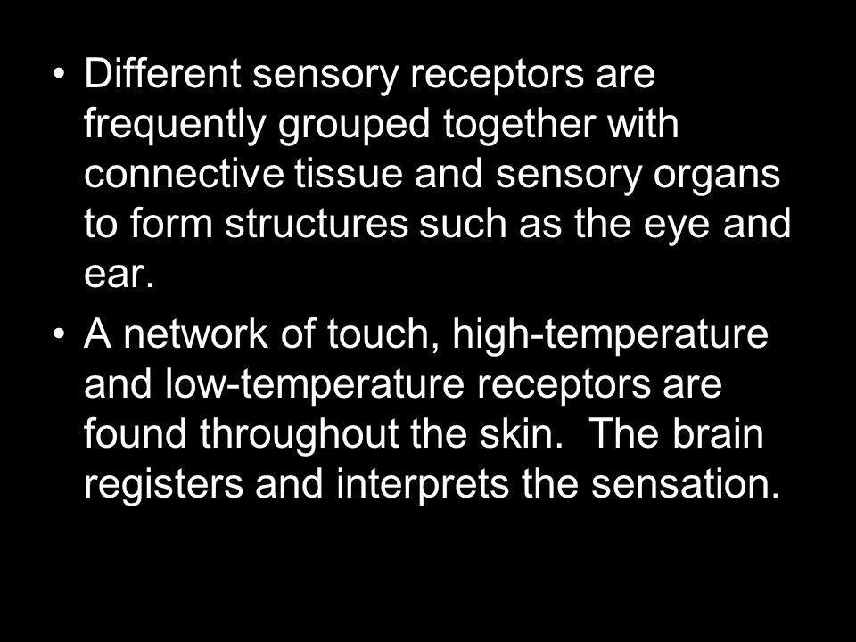NHC Anatomy and Physiology I Interactive Tutorials
