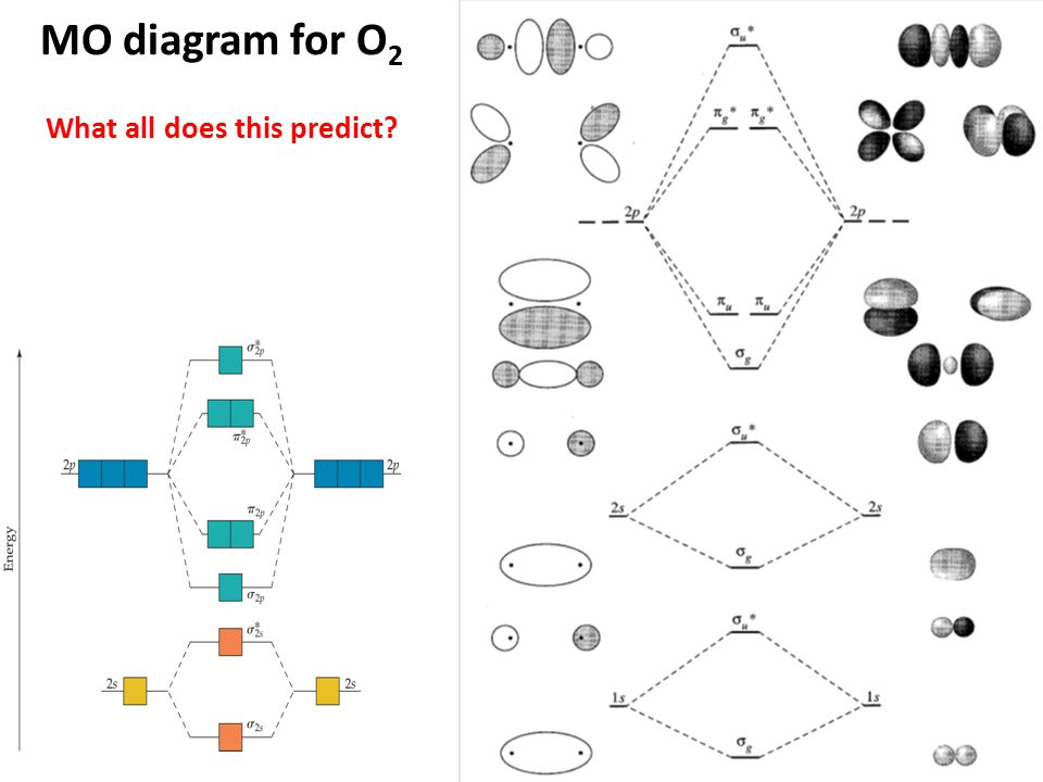 MO diagram for O 2 What all does this predict?