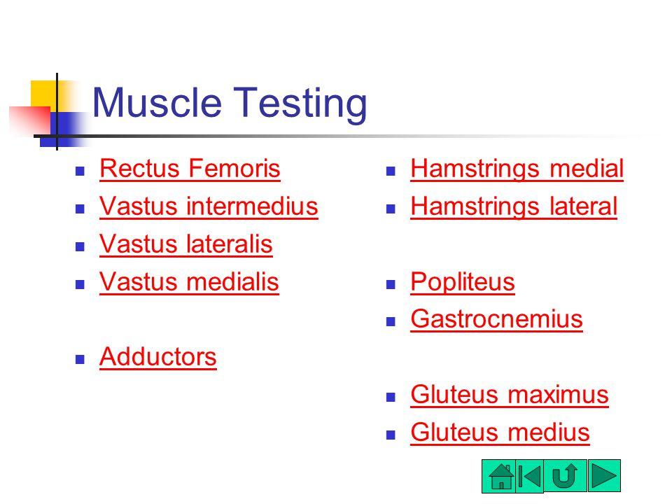 Muscle Testing Rectus Femoris Vastus intermedius Vastus lateralis Vastus medialis Adductors Hamstrings medial Hamstrings lateral Popliteus Gastrocnemius Gluteus maximus Gluteus medius