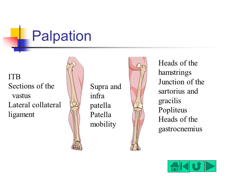 Palpation ITB Sections of the vastus Lateral collateral ligament Supra and infra patella Patella mobility Heads of the hamstrings Junction of the sartorius and gracilis Popliteus Heads of the gastrocnemius