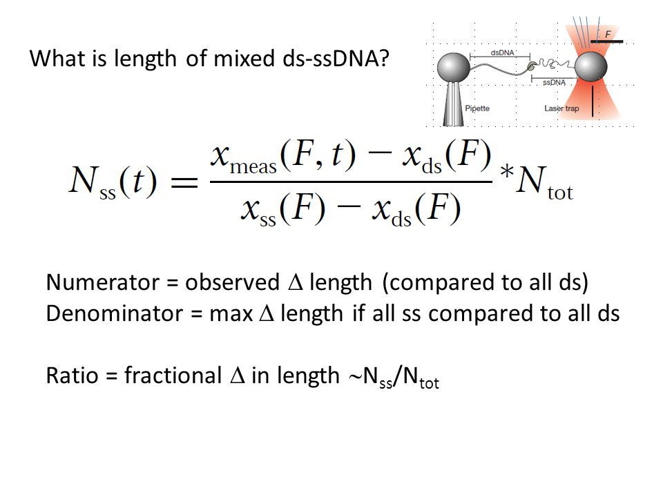 Numerator = observed  length (compared to all ds) Denominator = max  length if all ss compared to all ds Ratio = fractional  in length  N ss /N tot What is length of mixed ds-ssDNA