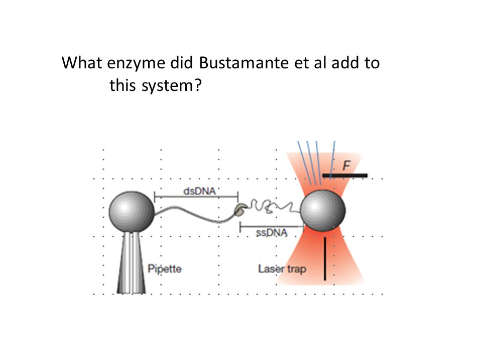 What enzyme did Bustamante et al add to this system