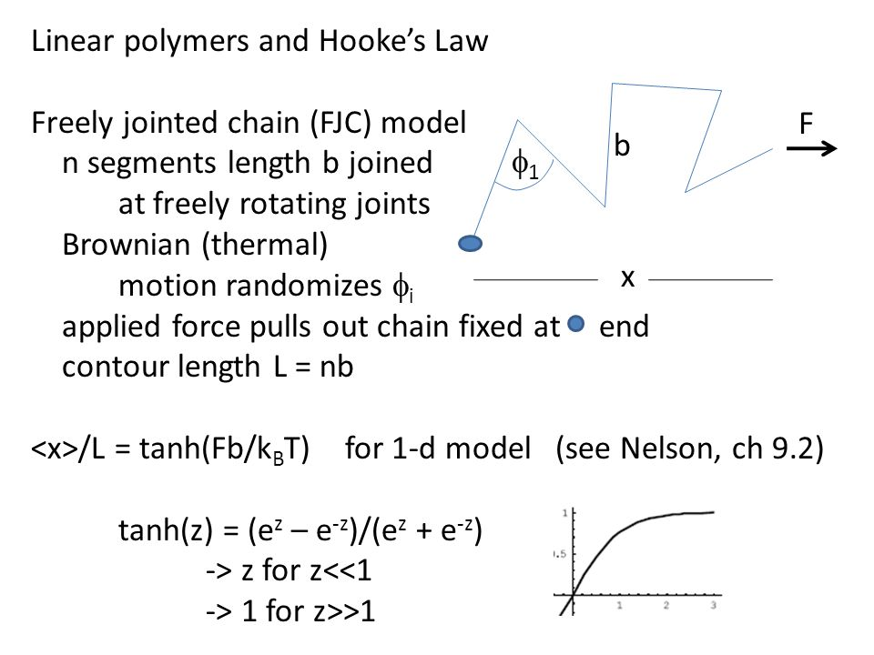 Linear polymers and Hooke's Law Freely jointed chain (FJC) model n segments length b joined at freely rotating joints Brownian (thermal) motion randomizes  i applied force pulls out chain fixed at end contour length L = nb /L = tanh(Fb/k B T) for 1-d model(see Nelson, ch 9.2) tanh(z) = (e z – e -z )/(e z + e -z ) -> z for z<<1 -> 1 for z>>1 11 F b x