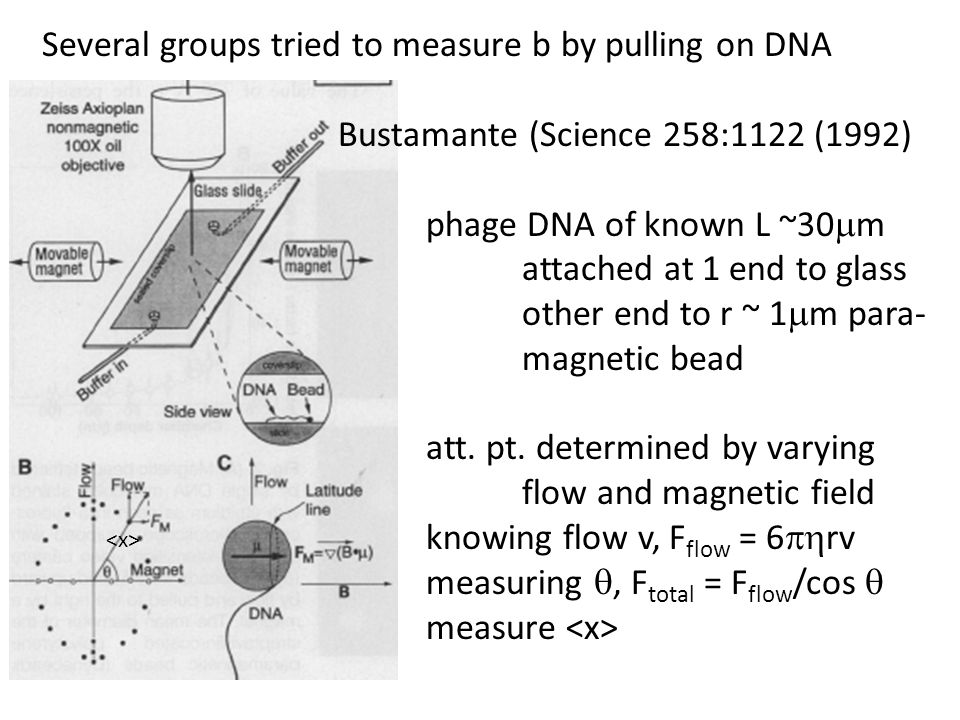 Several groups tried to measure b by pulling on DNA Bustamante (Science 258:1122 (1992) phage DNA of known L ~30  m attached at 1 end to glass other end to r ~ 1  m para- magnetic bead att.