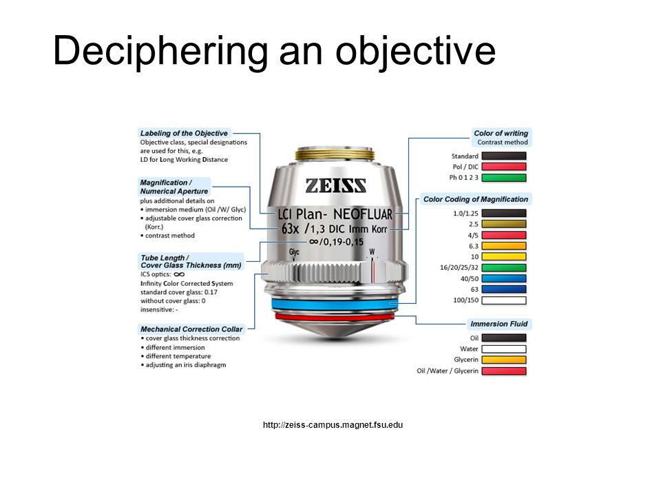 http://zeiss-campus.magnet.fsu.edu Deciphering an objective