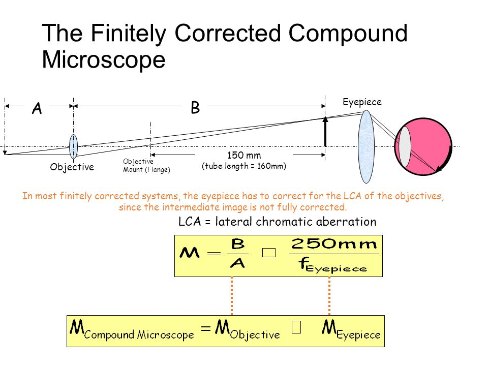 The Finitely Corrected Compound Microscope Objective Eyepiece Objective Mount (Flange) 150 mm (tube length = 160mm) B B A In most finitely corrected systems, the eyepiece has to correct for the LCA of the objectives, since the intermediate image is not fully corrected.