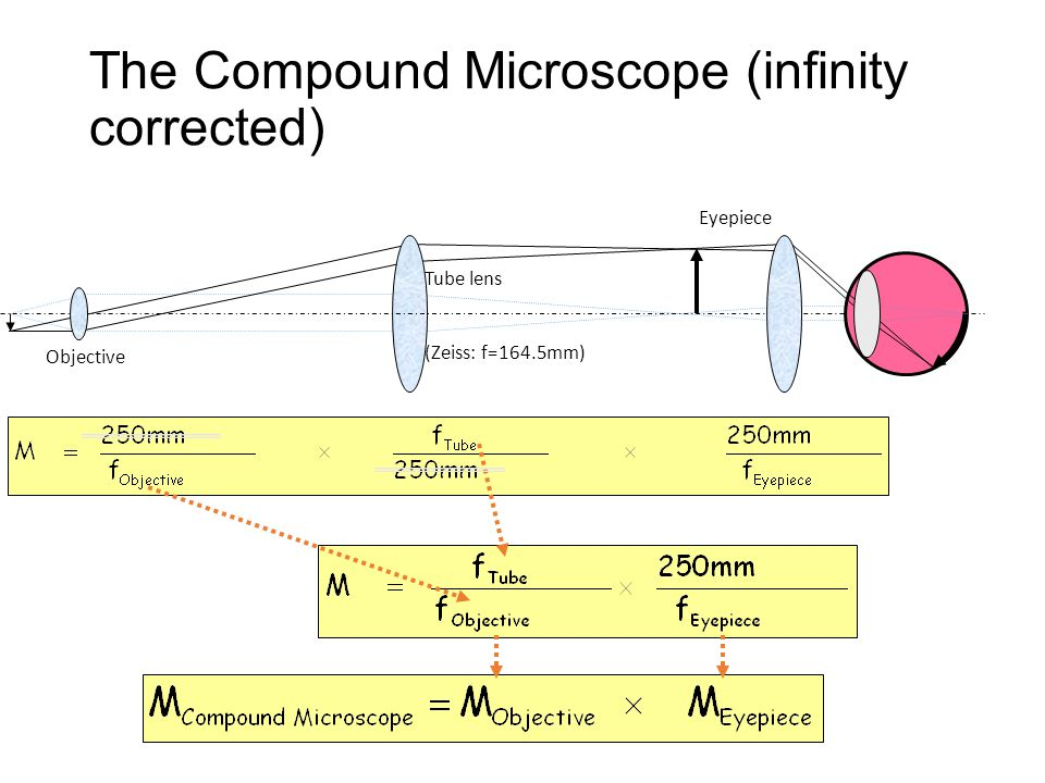 Tube lens (Zeiss: f=164.5mm) Objective Eyepiece The Compound Microscope (infinity corrected)