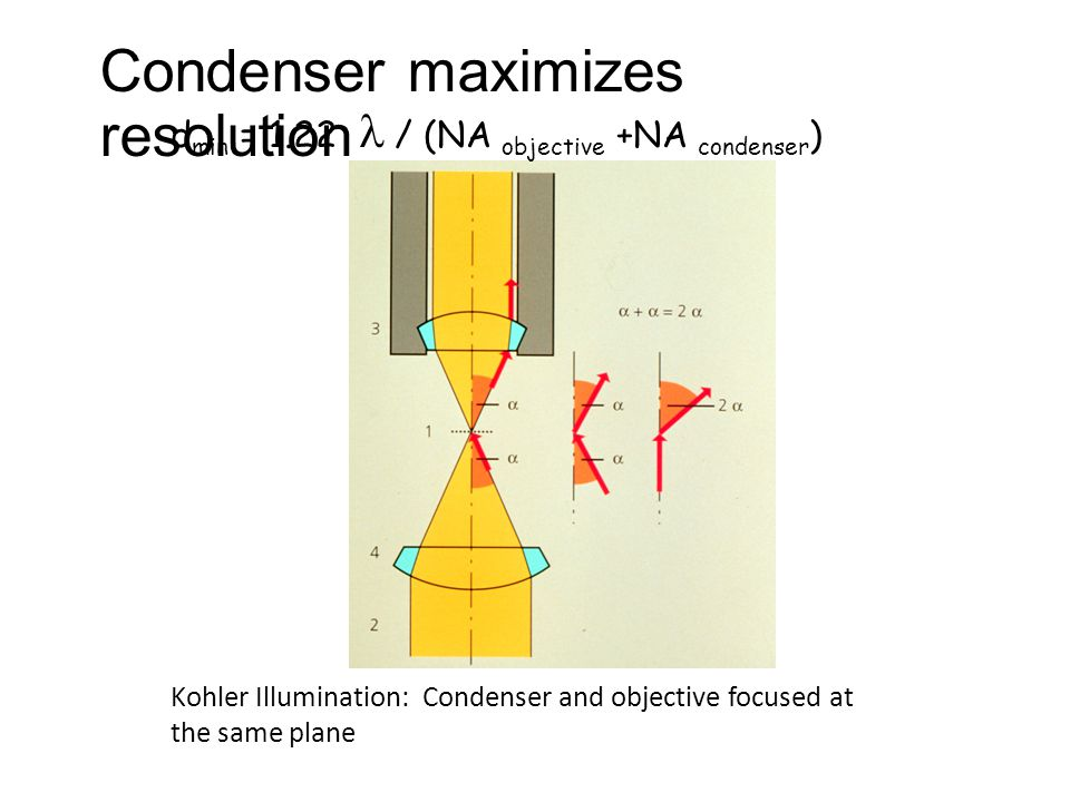 d min = 1.22 / (NA objective +NA condenser ) Kohler Illumination: Condenser and objective focused at the same plane Condenser maximizes resolution