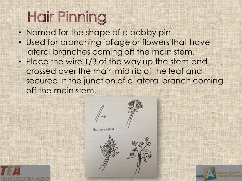Named for the shape of a bobby pin Used for branching foliage or flowers that have lateral branches coming off the main stem.
