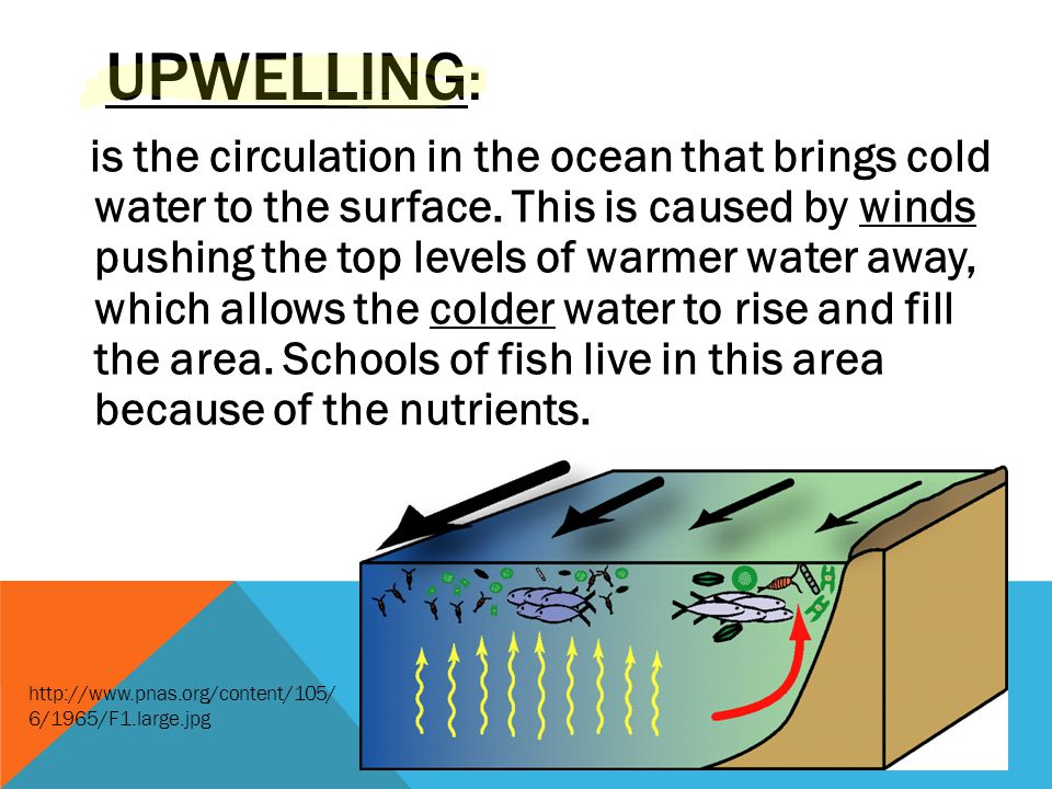 UPWELLING : is the circulation in the ocean that brings cold water to the surface. This is caused by winds pushing the top levels of warmer water away