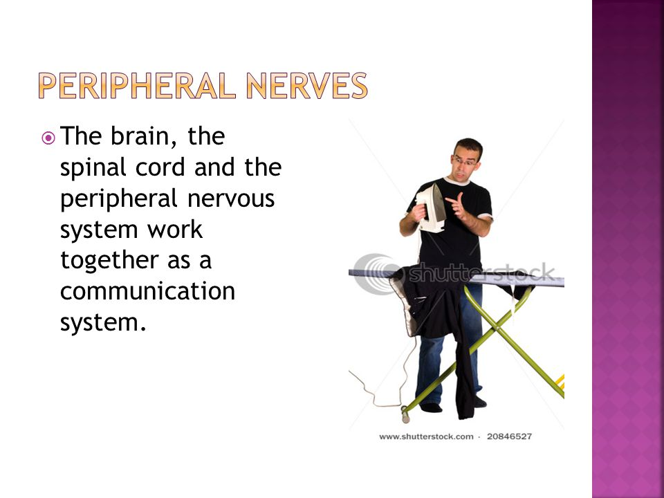  If the facial nerve is damaged, facial expression is absent on the affected side.