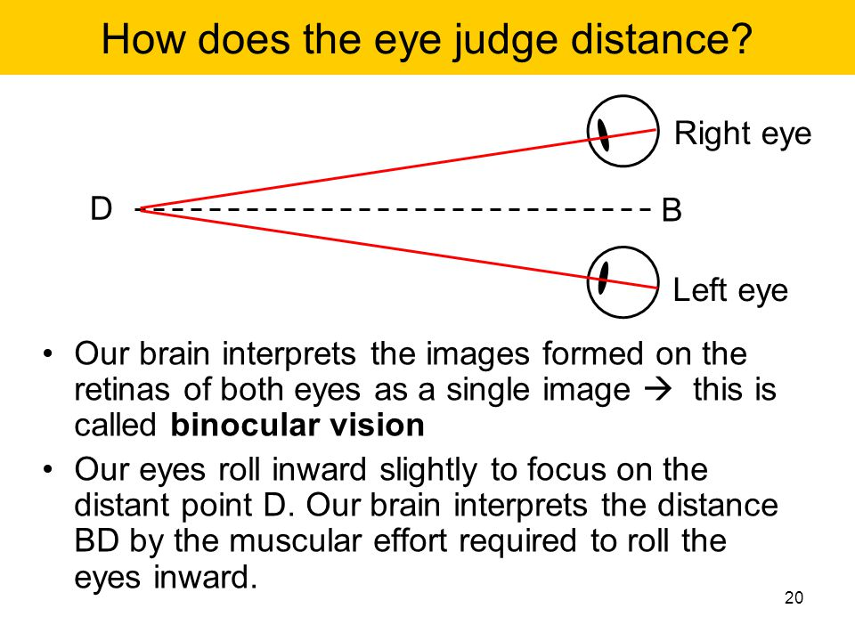 How does the eye judge distance? Our brain interprets the images formed on the retinas of both eyes as a single image  this is called binocular visio
