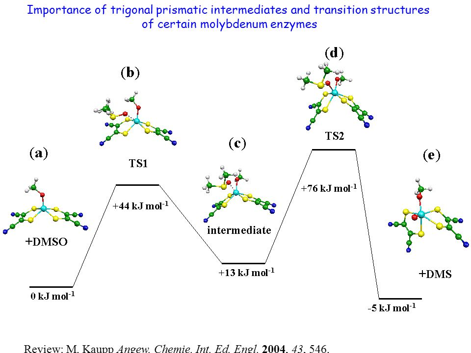 Importance of trigonal prismatic intermediates and transition structures of certain molybdenum enzymes Review: M. Kaupp Angew. Chemie, Int. Ed. Engl.