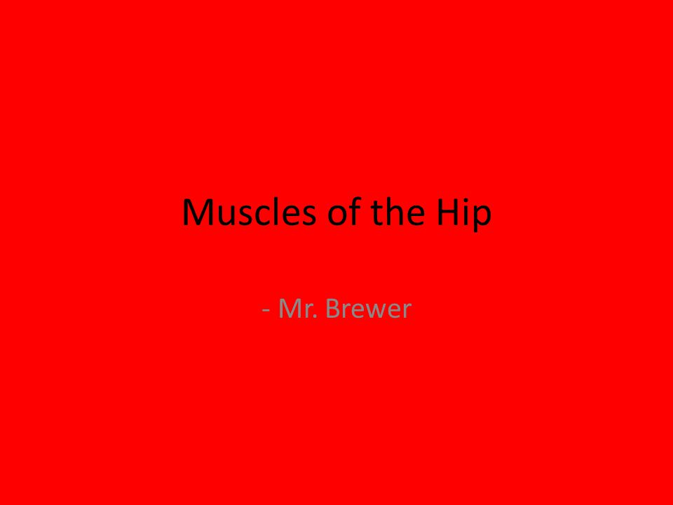 Muscles of the Hip - Mr. Brewer