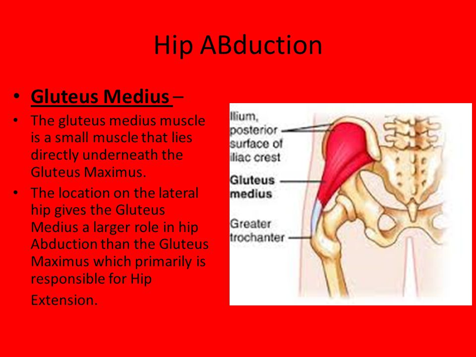 Hip ABduction Gluteus Medius – The gluteus medius muscle is a small muscle that lies directly underneath the Gluteus Maximus. The location on the late