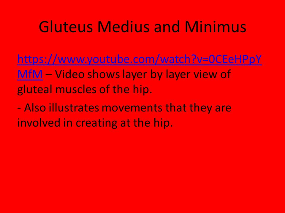 Gluteus Medius and Minimus https://www.youtube.com/watch?v=0CEeHPpY MfMhttps://www.youtube.com/watch?v=0CEeHPpY MfM – Video shows layer by layer view