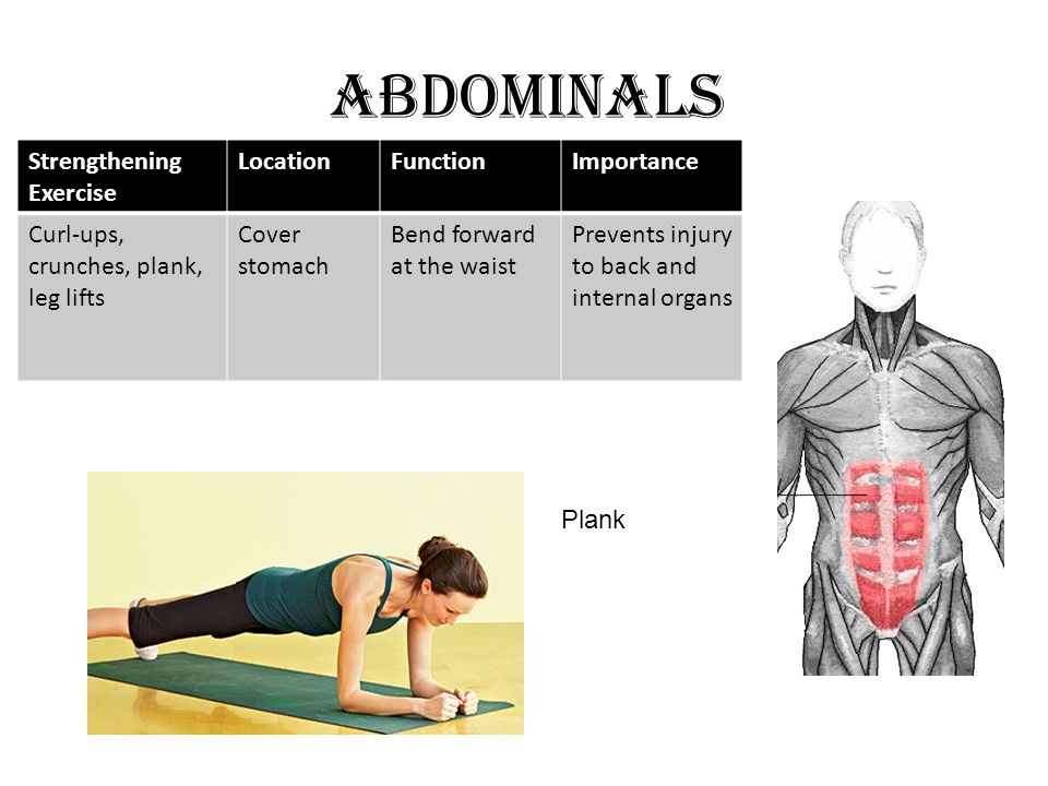 ABDOMINALS Strengthening Exercise LocationFunctionImportance Curl-ups, crunches, plank, leg lifts Cover stomach Bend forward at the waist Prevents injury to back and internal organs Plank