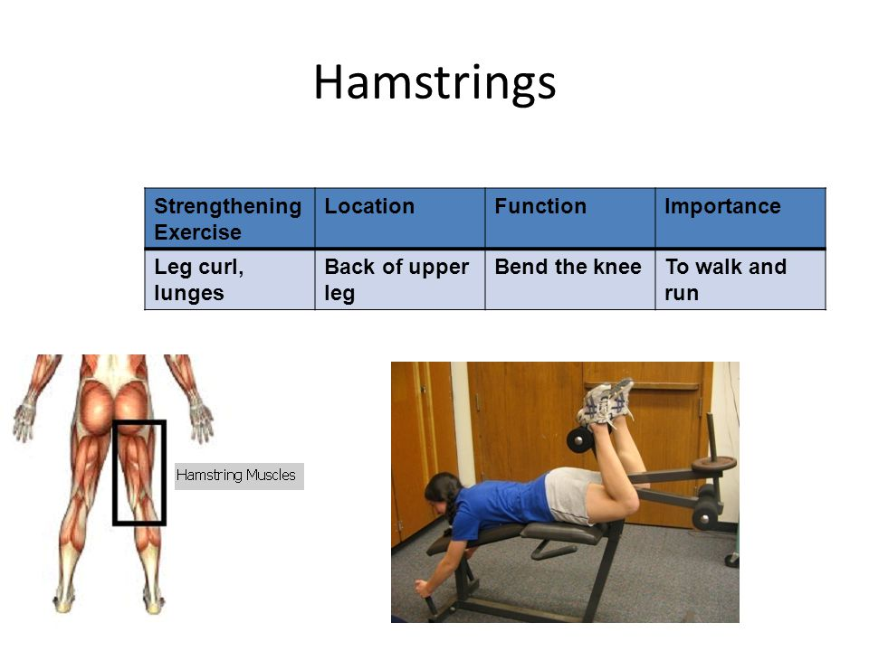Hamstrings Strengthening Exercise LocationFunctionImportance Leg curl, lunges Back of upper leg Bend the kneeTo walk and run