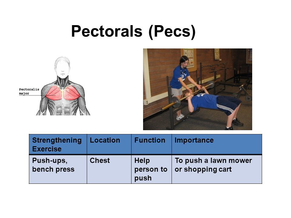 Strengthening Exercise LocationFunctionImportance Push-ups, bench press ChestHelp person to push To push a lawn mower or shopping cart Pectorals (Pecs)