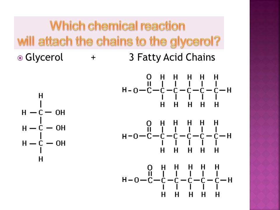  Glycerol +3 Fatty Acid Chains HHHHHH