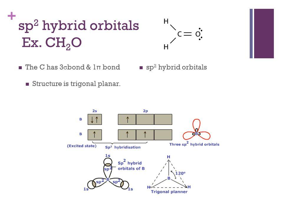 + sp 2 hybrid orbitals Ex.