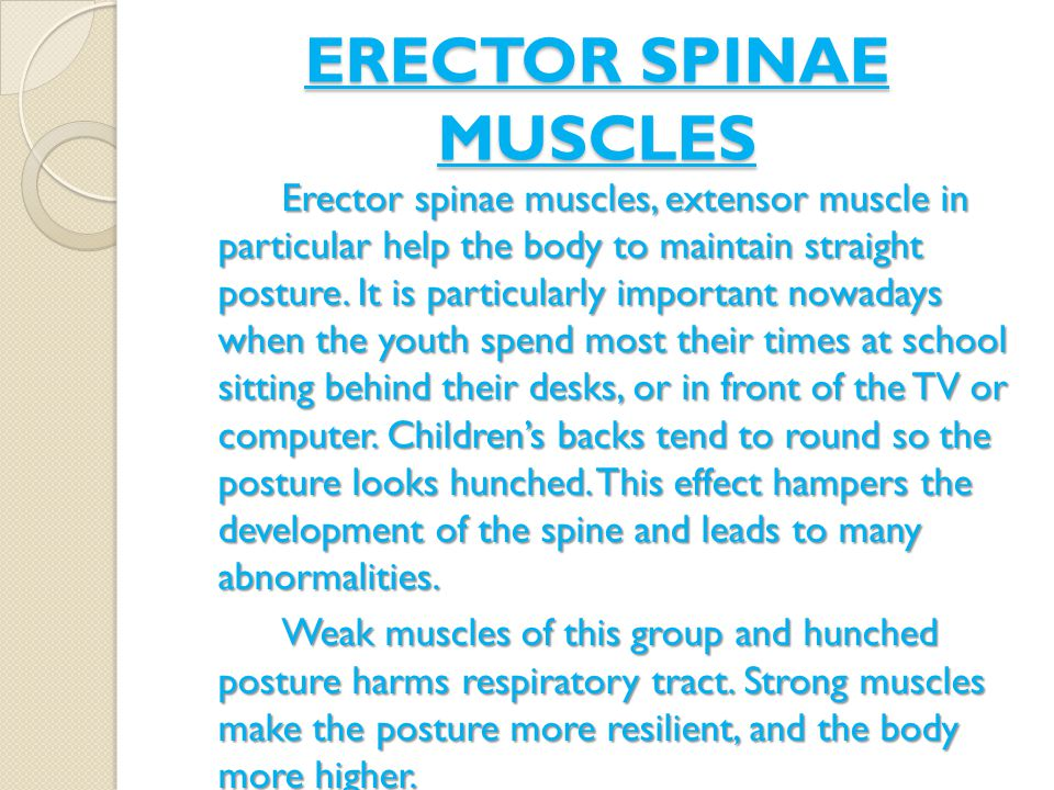 ERECTOR SPINAE MUSCLES Erector spinae muscles, extensor muscle in particular help the body to maintain straight posture.