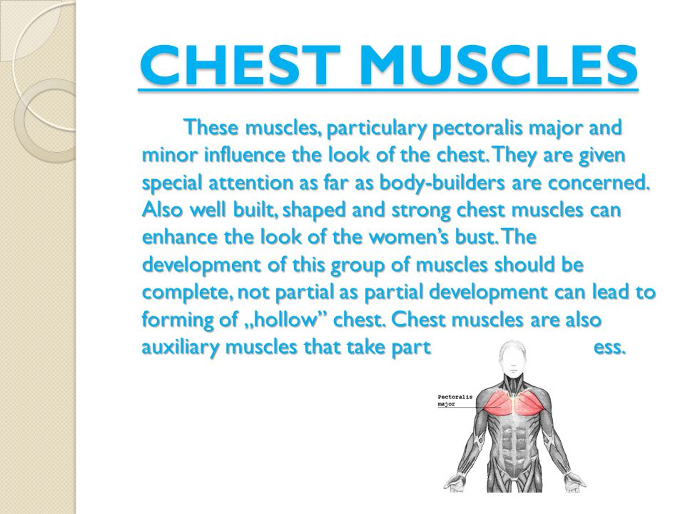 CHEST MUSCLES These muscles, particulary pectoralis major and minor influence the look of the chest.