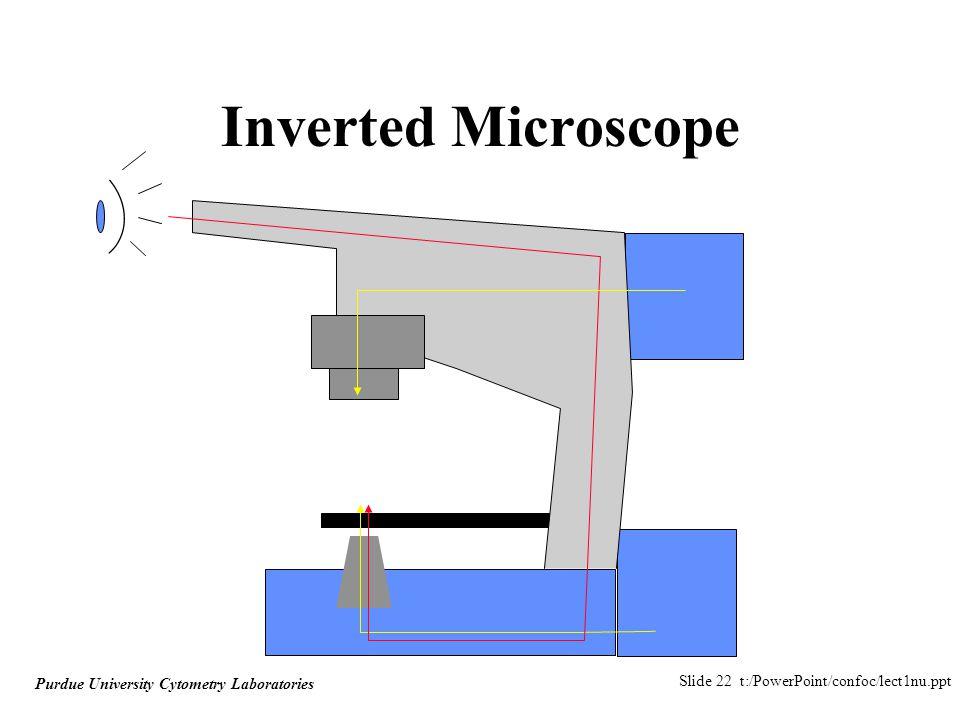 Slide 22 t:/PowerPoint/confoc/lect1nu.ppt Purdue University Cytometry Laboratories Inverted Microscope